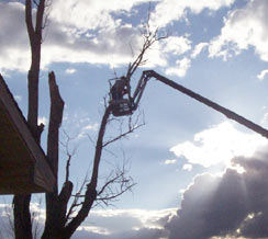 image of tree trimming service